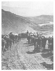 Cattle drives in the United States